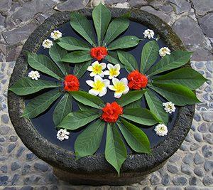fleurs300x
